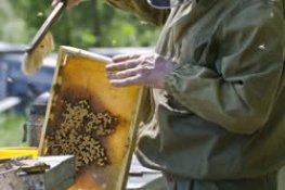 Beekeeping for Homesteaders and Preppers: Honeybees as Livestock