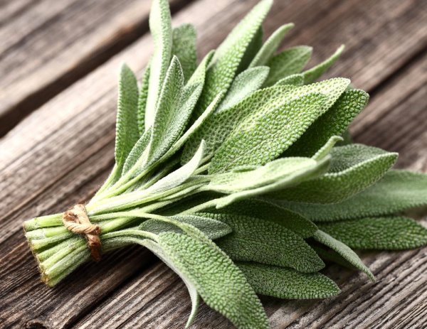 Medicinal Herbs -