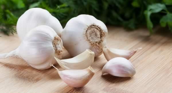 Medicinal Herbs to Grow -Garlic