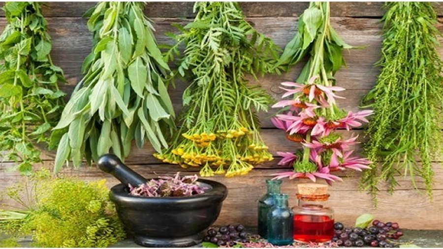 Survival Herbal Medicine: The Importance of Having Herbal Medicine for Survival