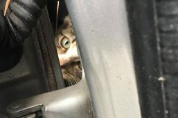 Virginia auto tech hailed as hero after rescuing kitten stuck in car fender for 45 miles