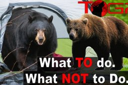 How to Backpack in Bear Country – How to Handle and Prevent Bear Encounters