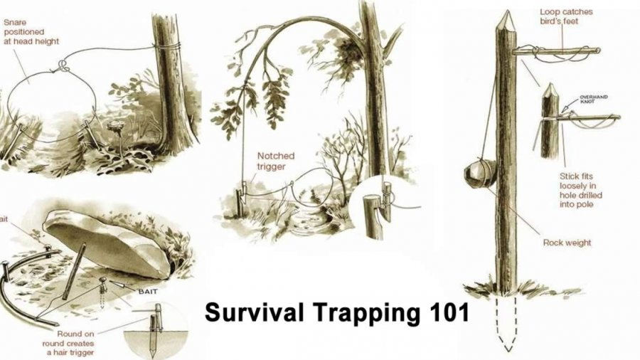 Survival Trapping 101 – Trapping Small Game in a Survival Situation