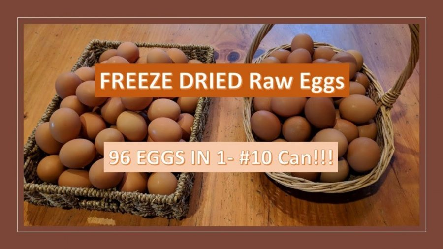 Freeze Dried Raw Eggs Using the Harvest Right Freeze Dryer.