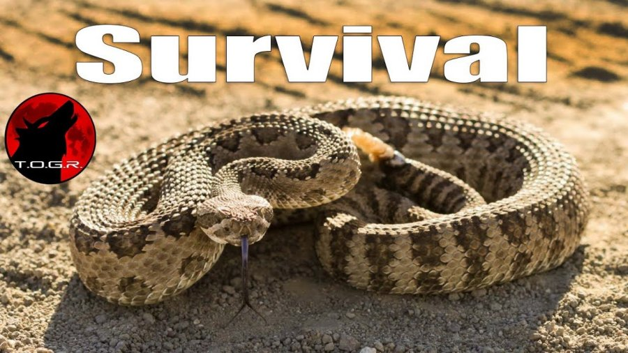 Snake Bite Treatment – How to Survive Being Bitten by a Venomous Snake