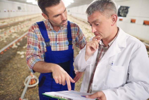 Conversation between farmer and a vet