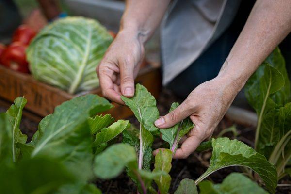Farmer hands taking care of plant leaf