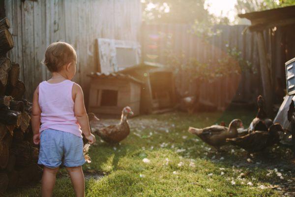Little boy walking in farm yard